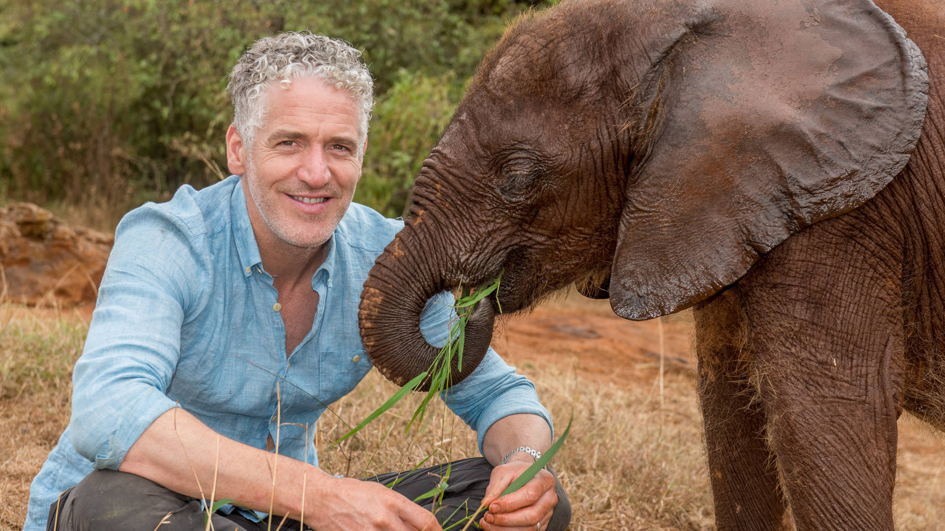 Gordon Buchanan feeding grass to a baby elephant
